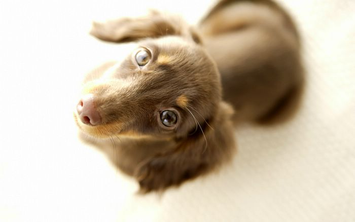 1440x900 World Famous Dogs / Lovely Doggy Wallpapers15 ...