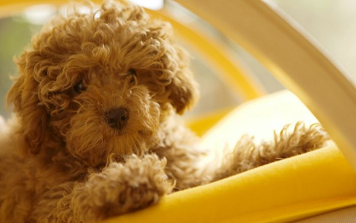 dogs and puppies. Close-up of a puppy dog,