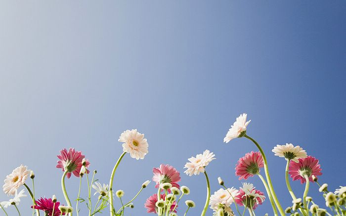 wallpaper sky under flowers - photo #8