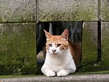 Snapshot of cats on street (Vol.1)50 pics