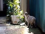 Snapshot of cats on street(Vol.3)55 pics