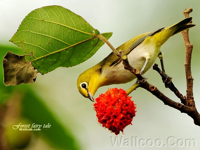 Birds in spring japanese white eye bird spring little birds 14