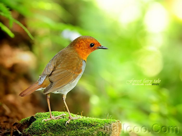 741 best images about birds on Pinterest