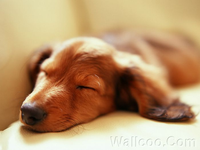 free puppy wallpaper. Free Wallpaper Of Puppies