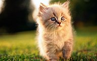Sweet Kitty : Adorable Fluffy Baby Kittens37 pics
