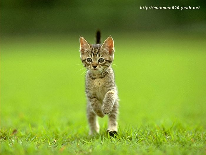 cute kitten wallpaper. Little Kittens Wallpaper