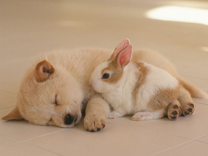 free wallpaper of puppies. Baby Puppies Wallpaper,