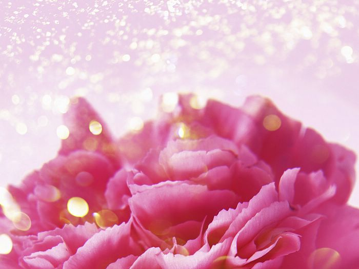 flower wallpapers. Frosted Pink Flowers Wallpaper
