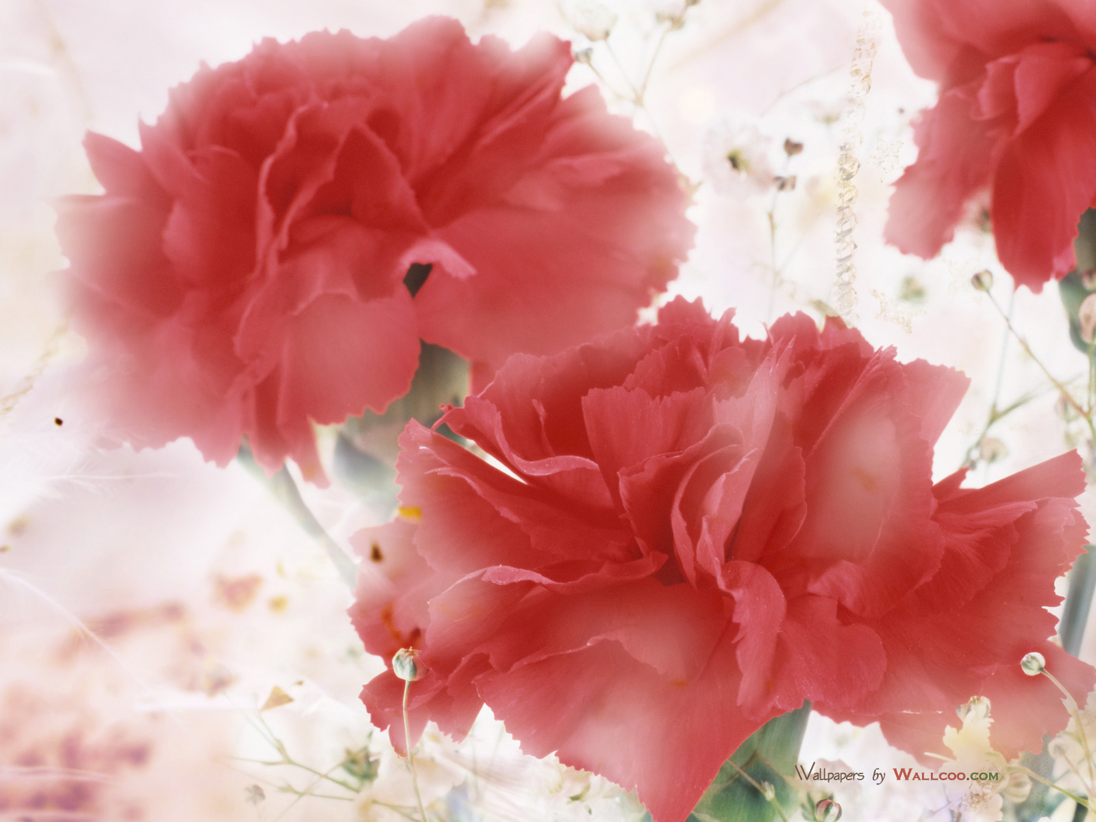 High Resolution Wallpaper flowers