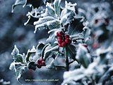 Christmas Photography CD Pack180 pics