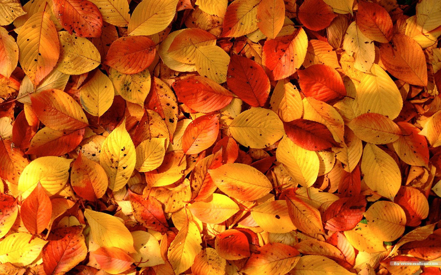 Autumn tints - Beautiful Fall leaves Widescreen wallpapers ...