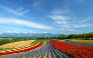 Furano Travel: Flower Fields and Country Scenery38 pics
