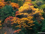 Beautiful China - Picturesque Autumn Forest45 pics