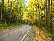 Autumn Roads30 pics